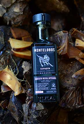 The cooked Organic agave for Montelobos Espadin Mezcal