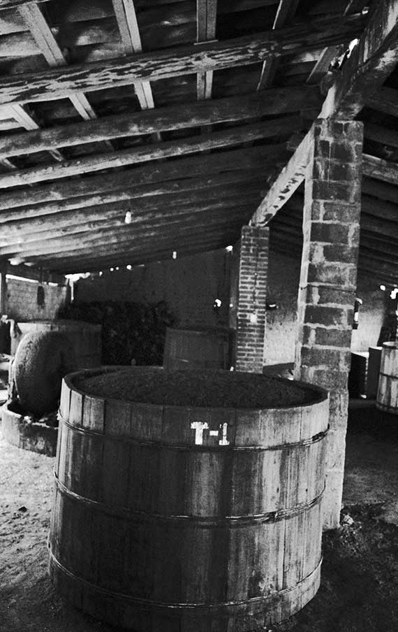 The fermentation area in the distillery