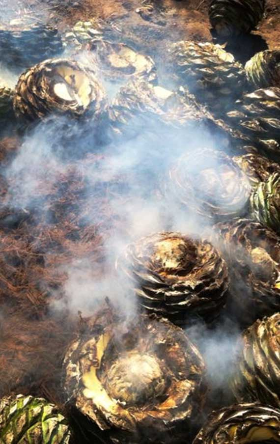 The cooking of the agave Tobala