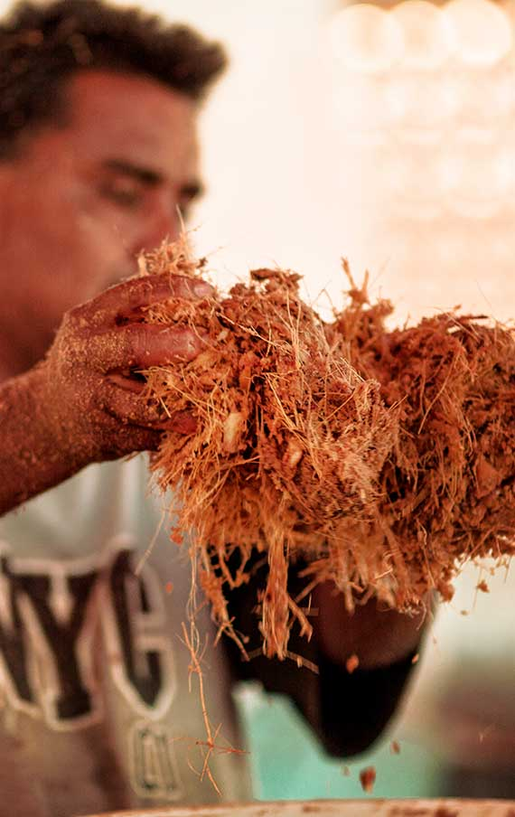 The fiber of the fermented agaves