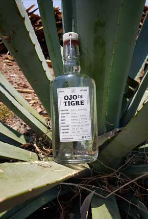 The bottle with Agave
