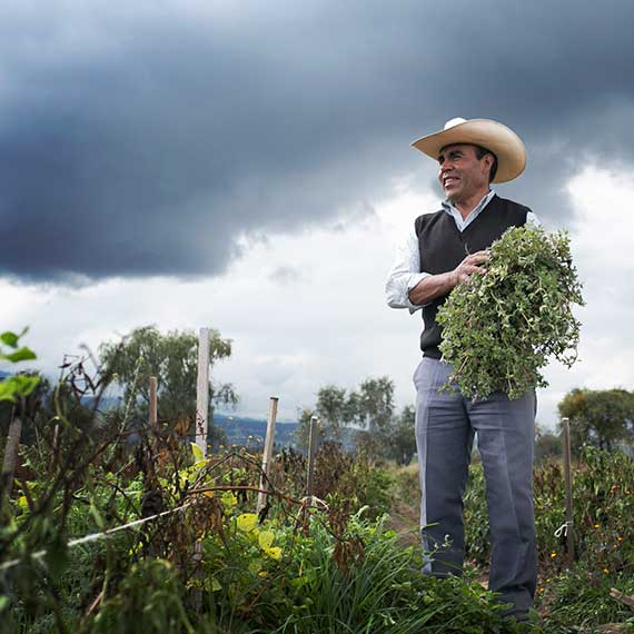 Don Saul the farmer in the Ancho Reyes fields